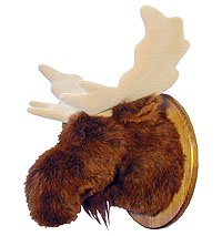 George - Medium Moose Trophy Mount