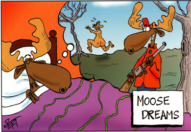 Moose Dreams Postcard