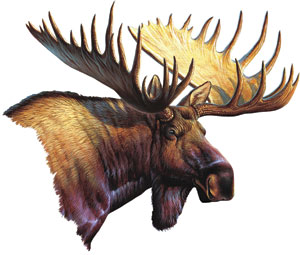 Large Car or Truck Moose Magnet