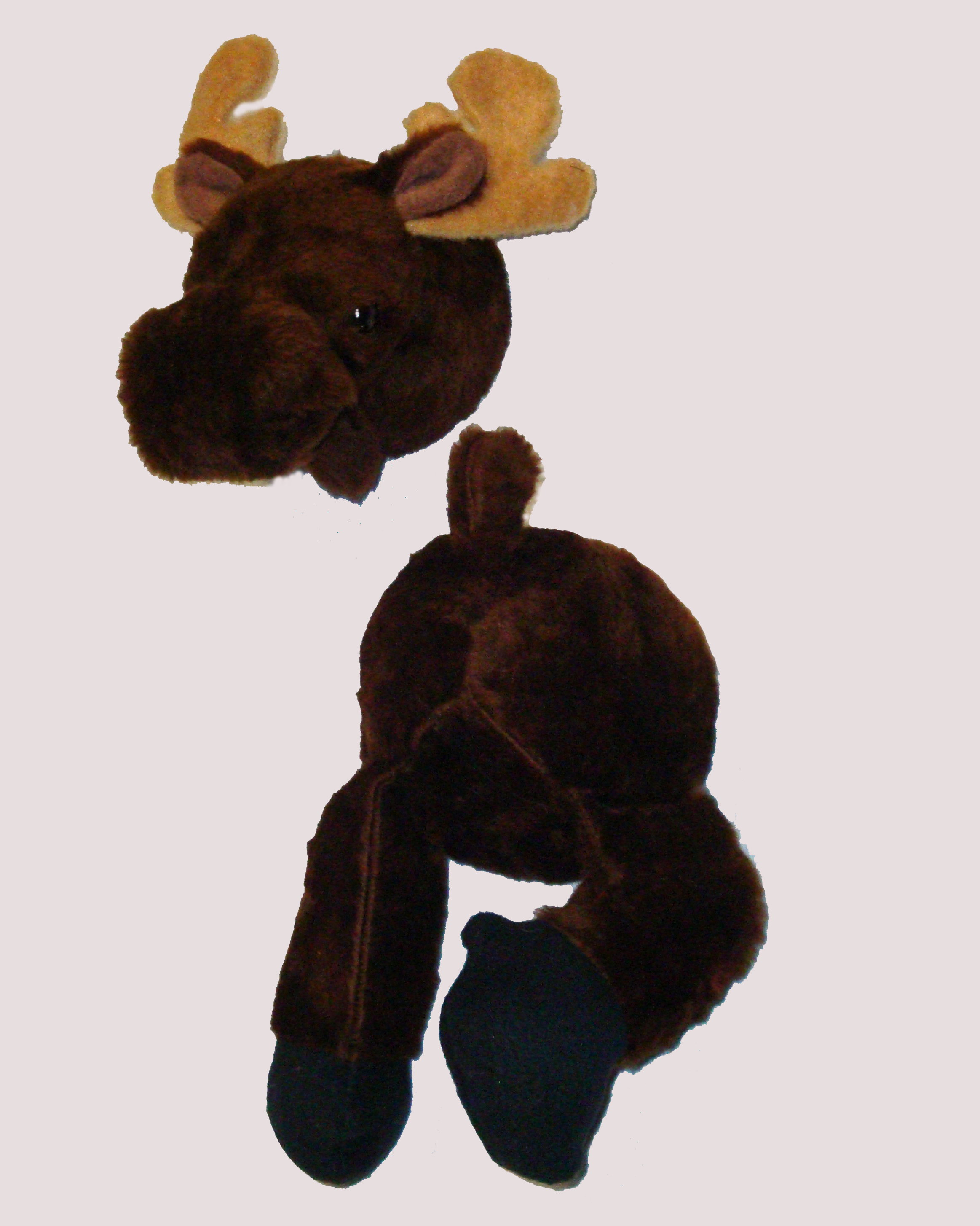 Moose Mount - Coming and Going!